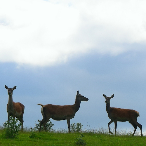 Feed the Deer on our Englihs language immersion programme meet the makers