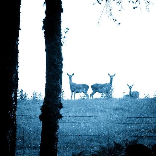 English Language School Scotland activities menu Red Deer on Clathic Deer Farm