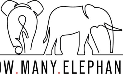 English for Designers | Holly Budge & How Many Elephants